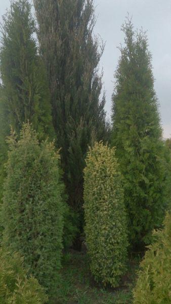 Drzewka ozdobne( Szkółka w Sławęcinku), szkółka w likwidacji